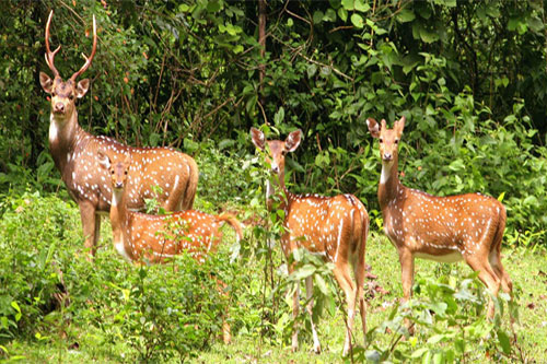 Kathmandu and Chitwan Jungle Safari Tour